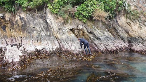 Intertidal and subtidal survey and monitoring